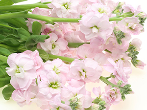 Bouquet of Light Pink Flowers